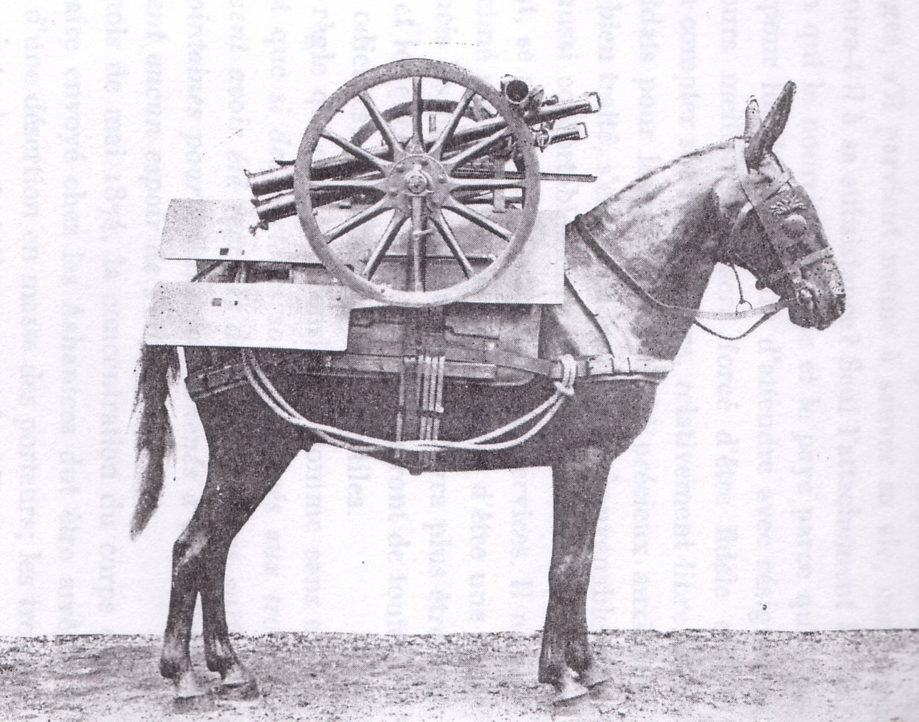 70mm Howitzer wheels and shield mounted on a pack mule