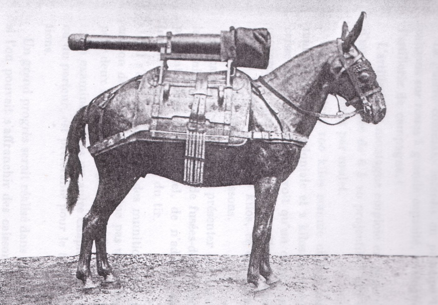 70mm Howitzer Barrel mounted on a pack mule