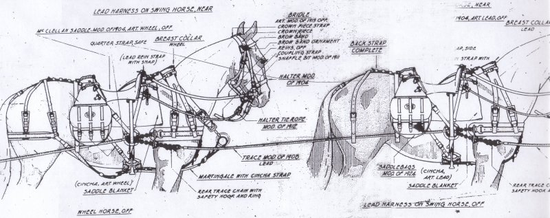 US M 1916 Harness and M 1904 Saddles on the Off Side Horses